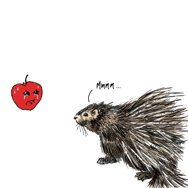 Drawing in Pinto Porcupine by WizardCroissant