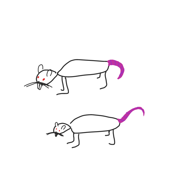 Drawing in rats by ArelaEstudio